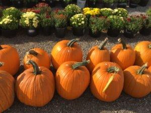 8 Fall Activities In Shipshewana